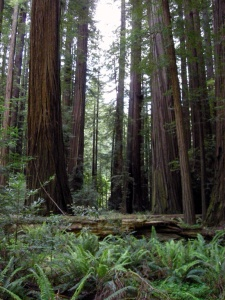 Humboldtrockefellerforest